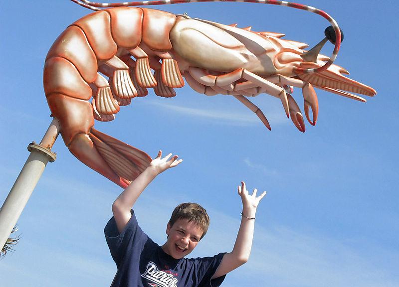 Matt lobster